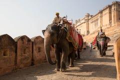 在琥珀色的堡垒的大象游览 免版税库存图片