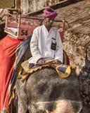 在琥珀色的堡垒的大象车手 库存照片