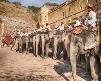 在琥珀色的堡垒的大象 免版税库存照片