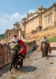 在琥珀色的堡垒,斋浦尔,拉贾斯坦-印度的大象司机 免版税库存照片