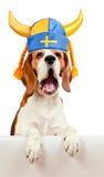 在瑞典帽子的小猎犬,隔绝在白色 免版税库存照片