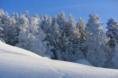 在瑞典语拉普兰的冬天 免版税库存图片