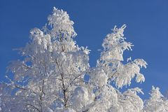 在瑞典语拉普兰的冬天 库存图片