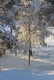 在瑞典语拉普兰的冬天 图库摄影