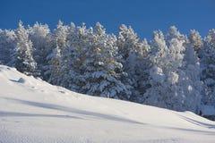 在瑞典语拉普兰的冬天 库存照片