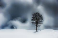 在瑞士的山的偏僻的树 图库摄影