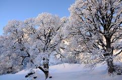在瑞士雪圣诞节山的Braunwald 免版税图库摄影