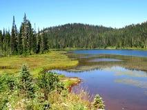 在瑞尼尔山国家公园的流动的绿色曲线 图库摄影