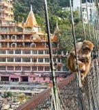 在瑞诗凯诗拉克什曼Jhula桥梁,印度的猴子 库存图片