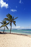 在瓜德罗普海岛上的加勒比海海滩 免版税库存图片