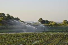 在瓜的领域的灌溉系统 浇灌领域 Sprin 库存照片