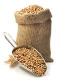 在瓢的麦子五谷在白色 库存图片