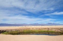 在瓦尔de la月/月球,月亮谷的绿洲在圣佩德罗火山de阿塔卡马沙漠 免版税库存照片