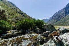 在瓦拉斯附近的山脉布朗卡 库存照片