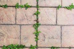 在瓦片之间的小植物 免版税图库摄影