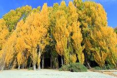在瓦纳卡湖,新西兰的秋天 免版税库存图片