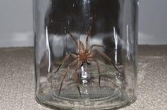 在瓶子的大蜘蛛 图库摄影