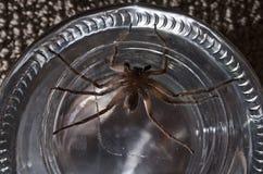 在瓶子的大蜘蛛 免版税图库摄影