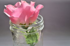 在瓶子的桃红色玫瑰 免版税库存图片