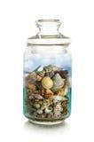 在瓶子的海壳 免版税图库摄影