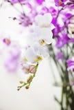在瓶子的白色兰花植物兰花花分支 免版税库存图片