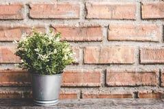 在瓶子的绿色花与石墙的装饰的, 免版税库存照片