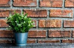 在瓶子的绿色花与石墙的装饰的 免版税库存图片