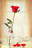 在瓶的红色玫瑰 免版税库存图片