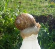 在瓶的蜗牛 免版税库存照片