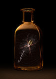 在瓶的蜘蛛 免版税库存图片