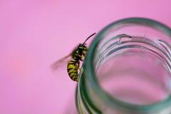 在瓶的黄蜂 免版税库存照片