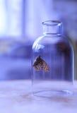 在瓶的蝴蝶 免版税库存照片