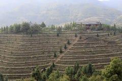 在瓷的有机tieguanyin茶大阳台 免版税库存图片
