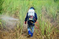 在甘蔗领域的农夫喷洒的除草药 免版税图库摄影