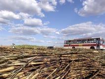 在甘蔗领域的工作者公共汽车 免版税库存图片