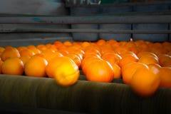 在生产单位的橙色果子 库存照片