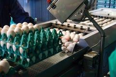 在生产线装箱的鸡蛋 库存图片