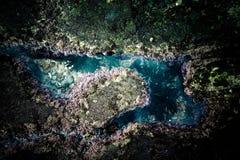 在生态系的生活在海洋的浪潮的以后一个水坑 库存图片