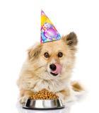 在生日帽子的小狗在一个碗附近舔嘴唇用干食物 背景查出的白色 库存照片