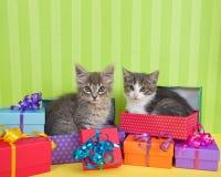 在生日礼物的平纹小猫 库存照片