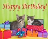 在生日礼物的平纹小猫 免版税库存图片