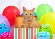 在生日礼物的橙色虎斑猫,惊喜聚会 免版税库存图片