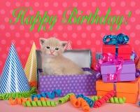 在生日箱子的桔子浅黄色的小猫有礼物和党帽子的 免版税库存照片