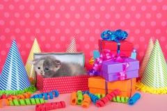 在生日箱子的白棉布小猫有礼物和党帽子的 免版税库存图片