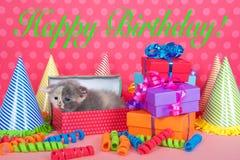 在生日箱子的白棉布小猫有礼物和党帽子的 库存图片