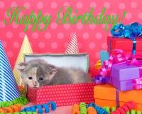 在生日箱子的白棉布小猫有礼物和党帽子的 库存照片