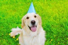 在生日纸盖帽的愉快的金毛猎犬狗在草 免版税图库摄影