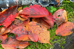 在生苔地面的红色叶子 库存照片