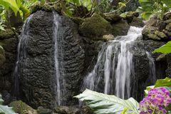 在生苔岩石的瀑布与在费尔柴尔德热带植物园的桃红色花在南佛罗里达 免版税库存图片