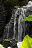 在生苔岩石的瀑布与在费尔柴尔德热带植物园的绿色叶子在南佛罗里达 免版税库存图片